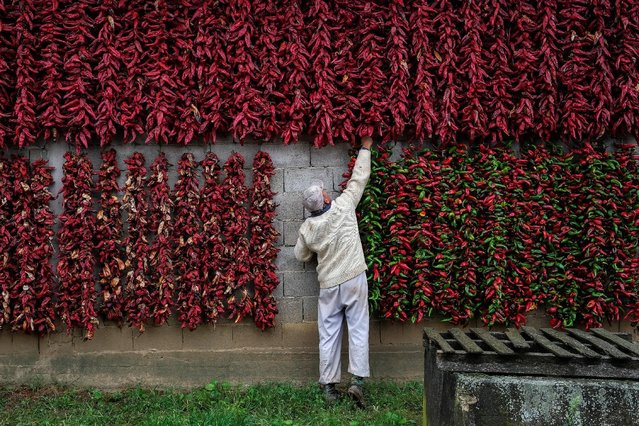 A man puts a bunch of paprika on the wall of his house to dry in the village of Donja Lakosnica, Serbia October 7, 2016. (Photo by Marko Djurica/Reuters)