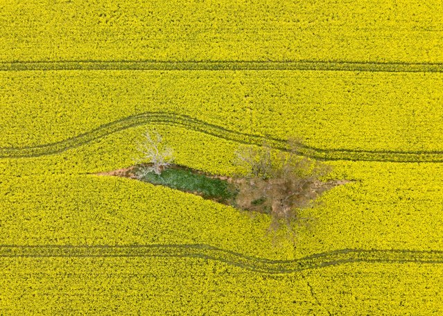 An aerial view of vast canola fields near the small town of Harden are pictured on September 29, 2020 in Harden, Australia. Farmers in NSW are enjoying a bumper harvest following drought breaking rains during the Australian winter. Above average rainfall between March and August has helped NSW emerge out of a prolonged drought, with winter crop production expected to increase year on year by 60 per cent. (Photo by Brook Mitchell/Getty Images)