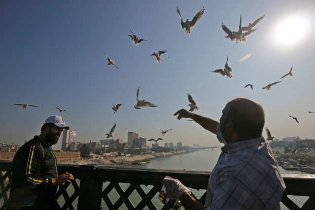 An Iraqi man feeds seagulls on a bridge across the Tigris River in central Baghdad on December 11, 2020. (Photo by Ahmad Al-Rubaye/AFP Photo)