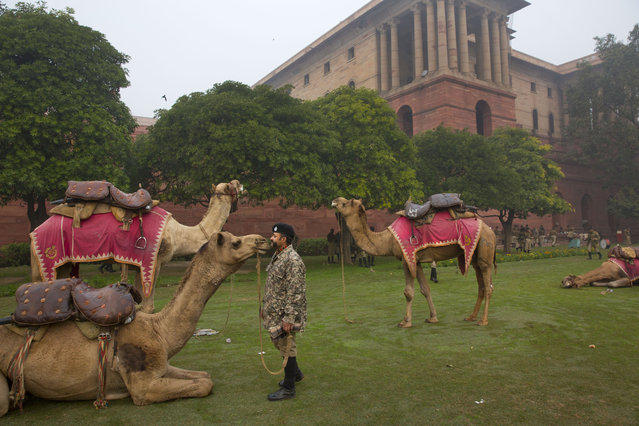 An Indian soldier from the Border Security Force camel mounted division speaks to his camel as it rests during preparations for the upcoming Republic day parade amidst the morning fog, in New Delhi, India, Wednesday, January 7, 2015. U.S. President Barack Obama is scheduled to visit India as the chief guest for this year's Republic Day celebrations, marked on Jan. 26. (Photo by Manish Swarup/AP Photo)