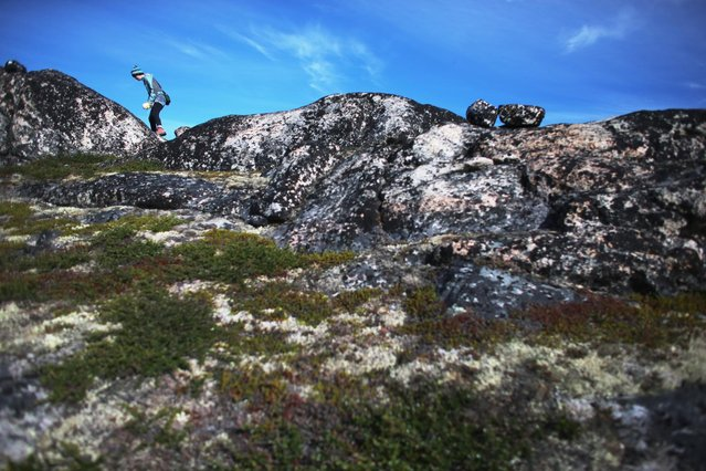 Sandra Cronauer, with the University of Buffalo, Department of Geology, looks for marks on the surface of the rocks to indicate the direction of the glacial movement when it was covered by ice on July 24, 2013 in Ilulissat, Greenland. (Photo by Joe Raedle/Getty Images via The Atlantic)