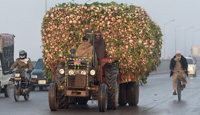 A Pakistani farmer drives a tractor trolly loaded with radishes on the way to the vegetable market in Lahore on January 13, 2016. (Photo by Arif Ali/AFP Photo)