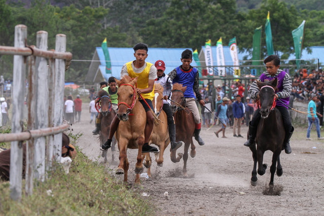 The little jockeys spur their horses in the Gayos traditional horse racing competition at Blang Bebangka field, Aceh Province, Indonesia on September 17, 2018. Gayos traditional horse racing is one of the hereditary traditions in Tanah Gayo, the competing horses came from 3 districts of Gayo tribe: Central Aceh, Bener Meraih and Gayo Lues. (Photo by Khalis Surry/Anadolu Agency/Getty Images)