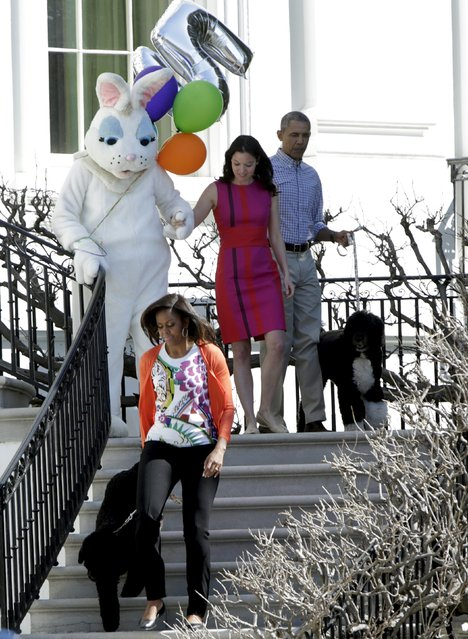 U.S. President Barack Obama (R), first lady Michelle Obama (bottom), with dogs Bo (top) and and Sunny (bottom), and the Easter Bunny join participants before the annual White House Easter Egg Roll in Washington April 6, 2015. (Photo by Gary Cameron/Reuters)