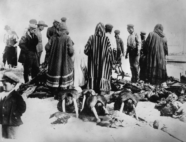 A scene at an Inuit blubber market in Canada, with dead walruses, March 1924. (Photo by Topical Press Agency/Getty Images)