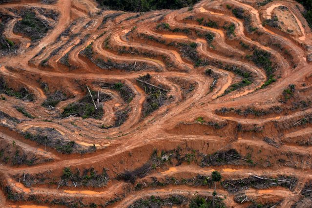 This photograph taken on February 24, 2014 during an aerial survey mission by Greenpeace at North Barito district in Central Kalimantan province on Indonesia's Borneo Island, shows cleared trees in a forest located in the concession of PT. Multi Persada Gatra Megah which is being developed for a palm oil plantation. Environmental group Greenpeace on February 26 accused US consumer goods giant Procter & Gamble of responsibility for the destruction of Indonesian rainforests and the habitat of endangered orangutans and tigers. (Photo by Bay Ismoyo/AFP Photo)