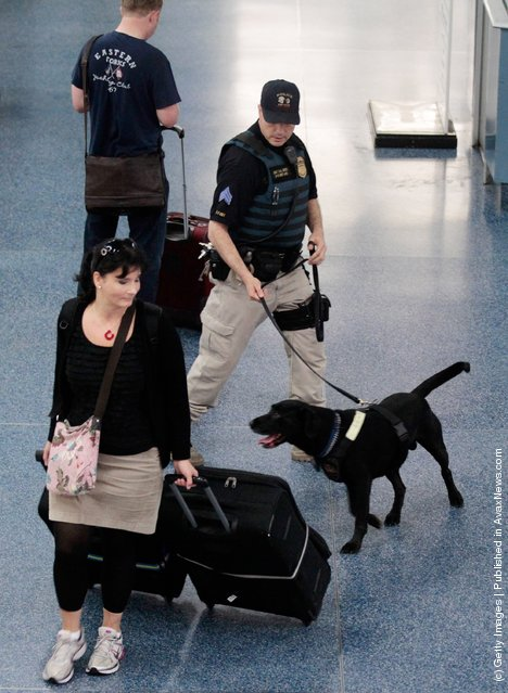 Amtrak Police Sergeant R.A. Smith and K9 Zorro patrol Penn Station September 9, 2011 in New York City