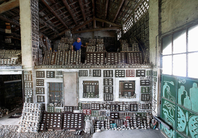 """Stone collector Luigi Lineri, 79, walks through his stone collection found along Adige river, at his home workshop in Zevio, near Verona, Italy, June 10, 2016. Lineri's home workshop is covered in stones – tens of thousands of them. They resemble animal heads, human faces and other forms, and the artist and poet believes may have been shaped by prehistoric humans. Lineri has built his vast collection over the last 50 years, making his finds along the Adige river, near Verona in northern Italy. """"I haven't counted them and don't intend to do so but the quantity is significant"""", Lineri said. (Photo by Alessandro Bianchi/Reuters)"""