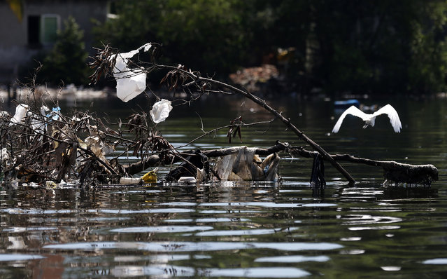 A bird flies next to garbage in the Guanabara Bay in Rio de Janeiro March 12, 2014. (Photo by Sergio Moraes/Reuters)