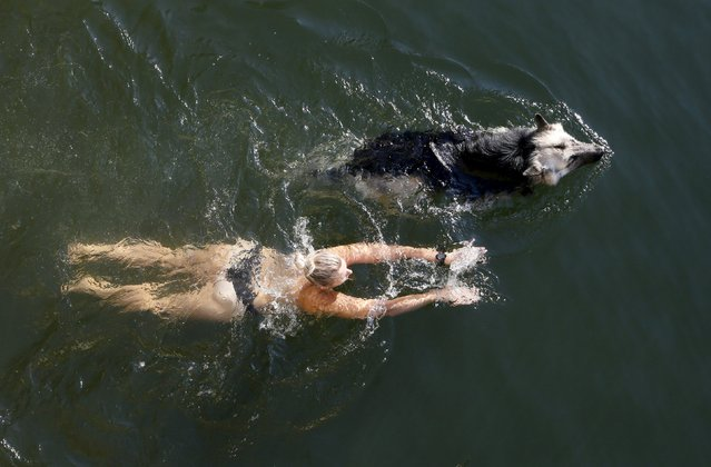 A woman swims with a dog in the waters of the Yenisei River in the Siberian Taiga area outside Krasnoyarsk, Russia, August 31, 2015. (Photo by Ilya Naymushin/Reuters)