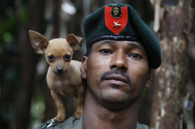 In this August 13, 2016 photo, a rebel soldier of the 48th Front of the Revolutionary Armed Forces of Colombia, or FARC, poses for a photo with his dog in the southern jungles of Putumayo, Colombia. As the country's half-century conflict winds down, with the signing of a peace deal with the Government perhaps just days away, thousands of FARC rebels are emerging from their hideouts and preparing for a life without arms. (Photo by Fernando Vergara/AP Photo)