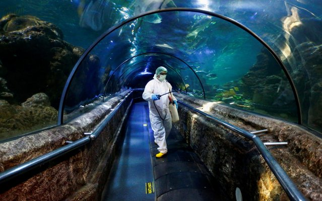 An employee in protective gears sprays disinfectant at the main exhibition tank at the Sea World at Jaya Ancol Dream Park as it is closed for public in the wake of coronavirus outbreak in Jakarta, Indonesia, Saturday, March 14, 2020. Indonesia's capital city announced a lockdown of all tourist destinations and entertainment spots as well as the closing all of its public schools for the next 14 days amid the global outbreak. For most people, the new coronavirus causes only mild or moderate symptoms. For some it can cause more severe illness. (Photo by Ajeng Dinar Ulfiana/Reuters)
