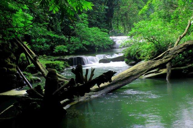 """Gunung Leuser National Parkr"""""""