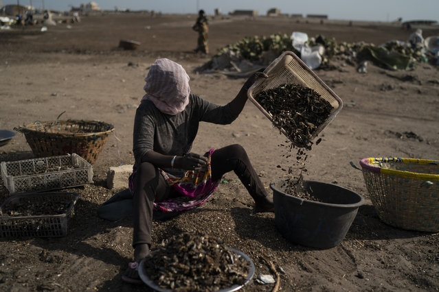 A woman works on a fish processing site on Bargny beach, some 35 kilometers (22 miles) east of Dakar, Senegal, Sunday April 25, 2021. (Photo by Leo Correa/AP Photo)