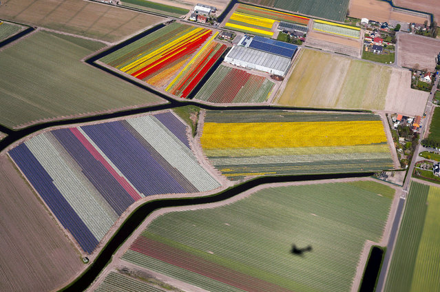 Aerial view of flower fields near the Keukenhof Park, also known as the Garden of Europe, in Lisse, The Netherlands, April 20, 2018. (Photo by Yves Herman/Reuters)