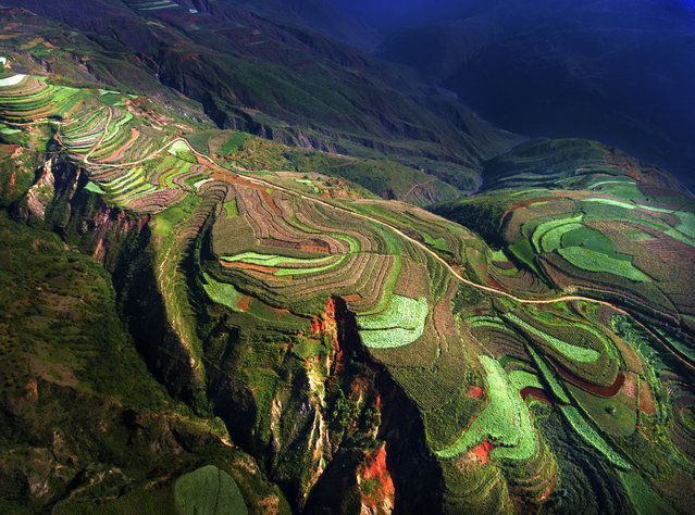 On the terraces. The competition – the first run by SkyPixel – attracted 27,000 entries, including this one of a rice terrace in China, which was one of favourites. (Photo by SkyPixel)