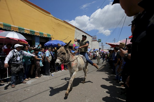 Riders race with their donkeys during the annual donkey festival in Otumba, near Mexico City, May 1, 2015. Villagers from Otumba have held their festival honoring the donkey, which includes donkey races, donkey rodeos and the best-costumed donkey competition. (Photo by Henry Romero/Reuters)