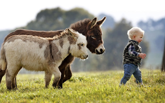 Miniature Donkeys Are The Best Friend Anyone Ever Had