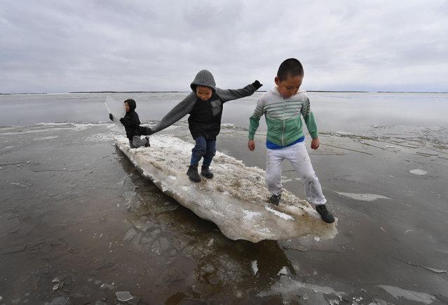 Schoolchildren play on melting ice at the climate change affected Yupik Eskimo village of Napakiak on the Yukon Delta in Alaska on April 18, 2019. (Photo by Mark Ralston/AFP Photo)
