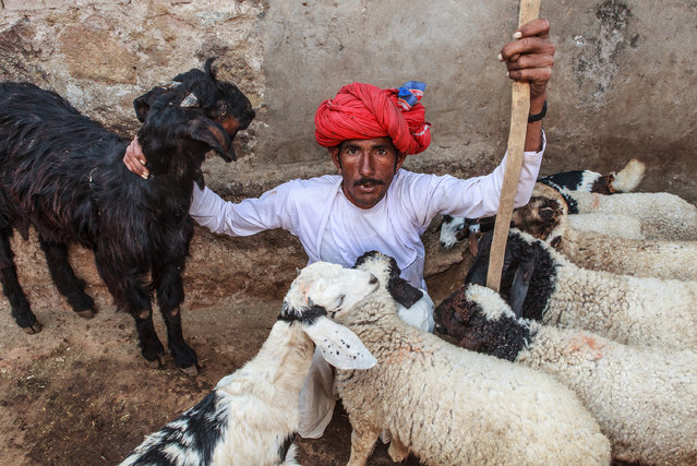 """""""In good company"""". The shepherds of Korta Village in Rajasthan. Photo location: Korta, Rajasthan, India. (Photo and caption by Sreeranj Sreedhar/National Geographic Photo Contest)"""