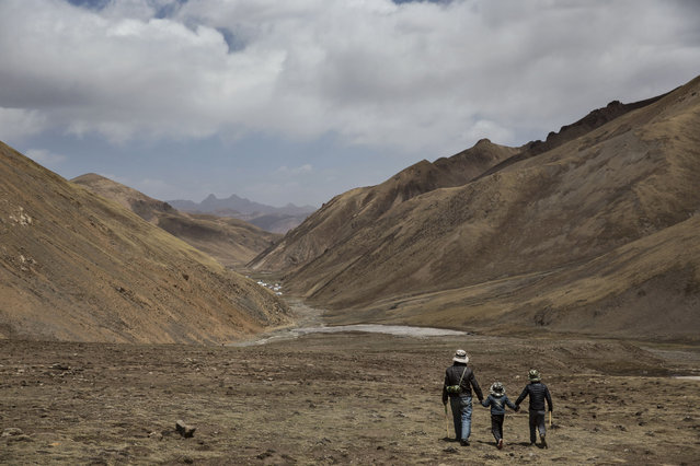 A Tibetan man walks with  his sons at high altitude after picking cordycep fungus on May 23, 2016 on the Tibetan Plateau near Zadoi in the Yushu Tibetan Autonomous Prefecture of Qinghai province. (Photo by Kevin Frayer/Getty Images)