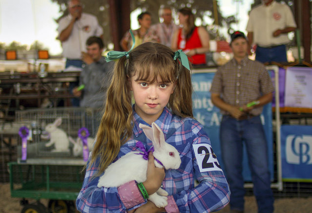 """Prize winner at small animal auction"". This is a proud winner of a small animal auction in rural Oregon. The auction was part of the Clackamas County Fair & Rodeo 2013, a popular local event that takes place every year during summer. Photo location: Canby, Oregon, USA. (Photo and caption by Eiko Emersleben/National Geographic Photo Contest)"