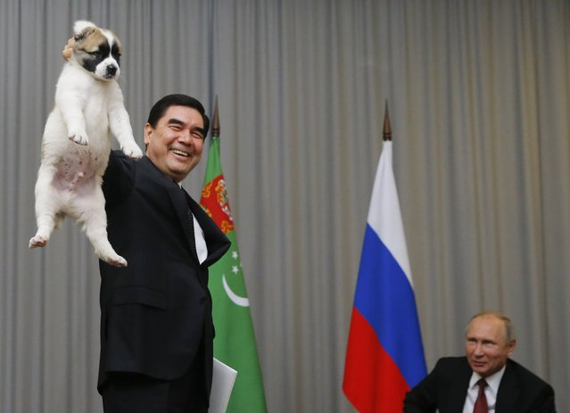 Turkmenistan's President Gurbanguly Berdimuhamedov (L) demonstrates a Turkmen shepherd dog, locally known as Alabai, before presenting it to his Russian counterpart Vladimir Putin during a meeting in Sochi, Russia October 11, 2017. (Photo by Maxim Shemetov/Reuters)