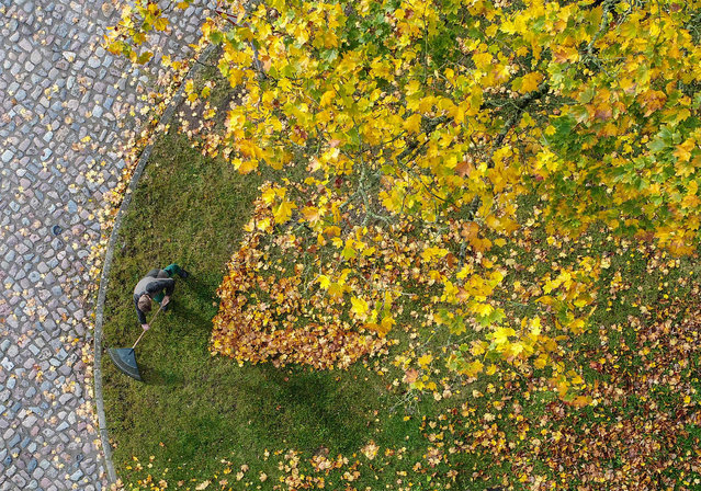 A man clears away autumn foliage beneath a maple tree in Sieversdorf, Germany, 8 October 2017. Aerial view taken with a drone. (Photo by Patrick Pleul/DPA/Zentralbild)