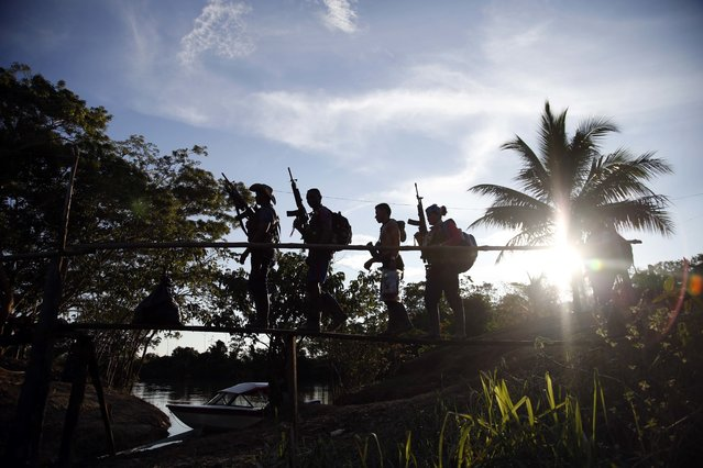 In this August 12, 2016 photo, rebels of the 48th Front of the Revolutionary Armed Forces of Colombia walk on a makeshift footbridge in the southern jungles of Putumayo, Colombia. With the peace accords about to signed between the FARC and the governemt, gone are the days when they had to change camp every few days for fear of being stunned in their sleep by bombs falling from the skies. (Photo by Fernando Vergara/AP Photo)