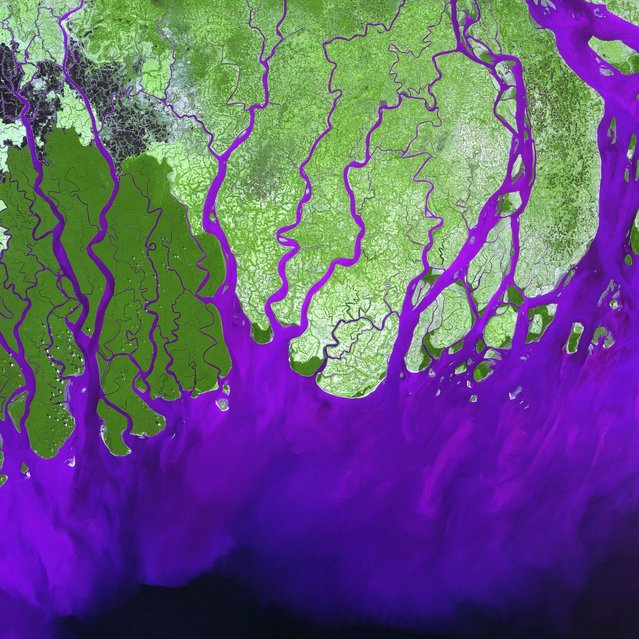 Ganges River Delta. The Ganges River forms an extensive delta where it empties into the Bay of Bengal. The delta is largely covered with a swamp forest known as the Sunderbans, which is home to the Royal Bengal Tiger. It is also home to most of Bangladesh, one of the world's most densely populated countries. Roughly 120 million people live on the Ganges Delta under threat of repeated catastrophic floods due to heavy runoff of meltwater from the Himalayas, and due to the intense rainfall during the monsoon season. This is a false-color composite image made using green, infrared, and blue wavelengths. Image taken February 28, 2000, by Landsat 7. (Photo by NASA/GSFC/USGS EROS Data Center)