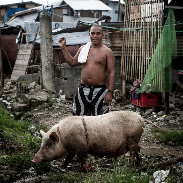 "Typhoon Haiyan survivor Edgar Bommeo poses for a portrait with one of his pigs ""Didin"" in front of a destoryed section of his home on November 5, 2014 in Tacloban, Leyte, Philippines. Edgar evacuated his children the night before the storm struck but he and his wife stayed at their house and were forced to run from the storm surge but both survived. Didin the pig also survived in the top floor of their house and was found walking through the rubble a few days later. (Photo by Chris McGrath/Getty Images)"
