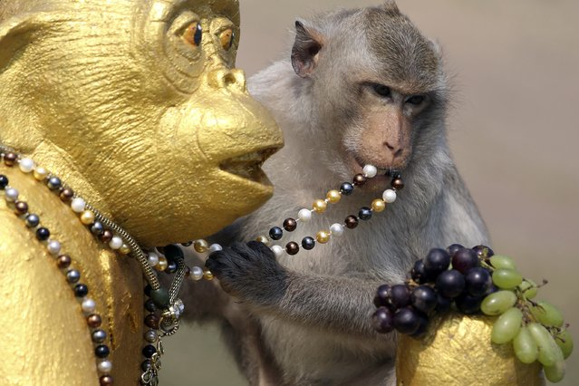 A long-tailed macaque grabs a necklace from a statue during the annual Monkey Buffet Festival at the Pra Prang Sam Yot temple in Lopburi, north of Bangkok November 30, 2014. The festival provides food and drinks to the local monkey population, which numbers more than 2,000, to thank them for drawing tourists to the town. (Photo by Damir Sagolj/Reuters)