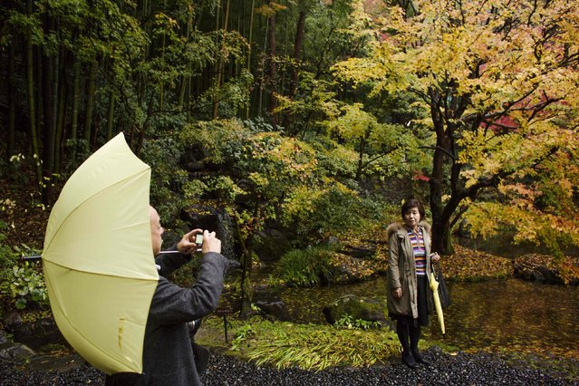 Visitors take pictures in the garden of Suntory Holdings' Yamazaki Distillery in Shimamoto town, Osaka prefecture, near Kyoto, December 1, 2014. (Photo by Thomas Peter/Reuters)