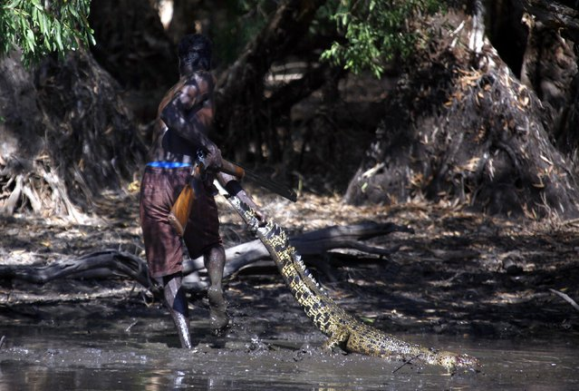 """Australian Aboriginal hunter Roy Gaykamangu of the Yolngu people drags a crocodile he has just shot dead out of a billabong near the """"out station"""" of Yathalamarra, located on the outksirts of the community of Ramingining in East Arnhem Land November 22, 2014. (Photo by David Gray/Reuters)"""