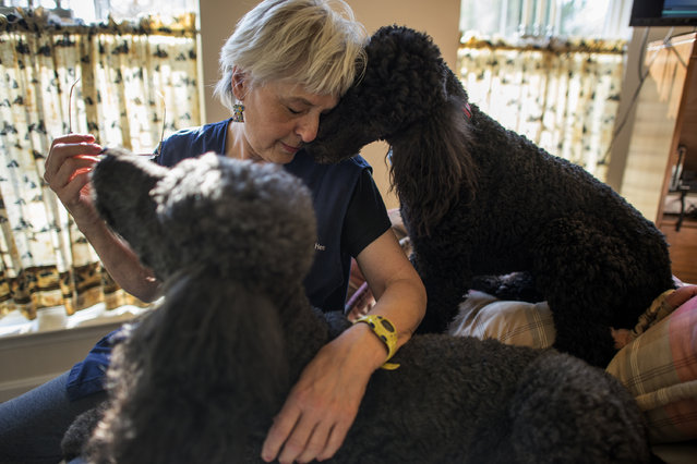 Sher snuggles with her pets, Spirit and Joie at House with a Heart Senior Pet Sanctuary in Gaithersburg, MD on November 12, 2014. Spirit and Joie are among 21 dogs living full time at the sanctuary. (Photo by Bonnie Jo Mount/The Washington Post)