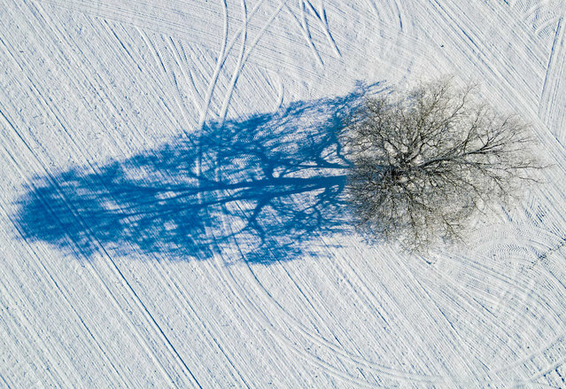 A tree covered with hoarfrost casts a shadow on a snowy field, shot with a drone in Sieversdorf-Hohenofen, Germany on January 31, 2021. (Photo by Patrick Pleul/dpa)