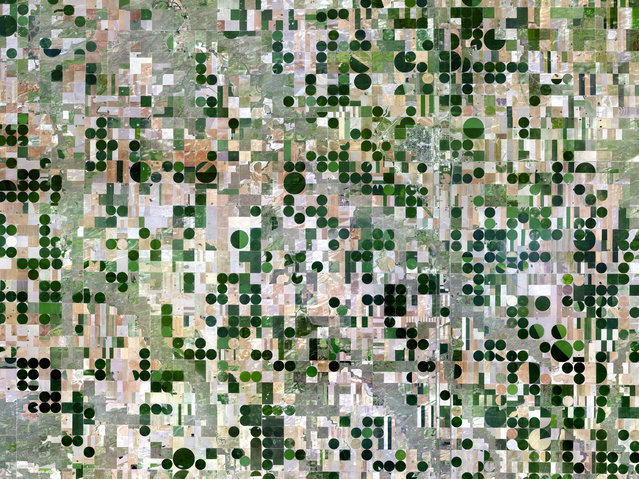 Kansas Pivot Irrigation. (Photo by Benjamin Grant/Digital Globe/Caters News)