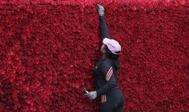 A woman places roses on a structure made to resemble the Cochasqui pyramid temple as they try to impose a new category in the Guinness World Record, as the biggest structure made with roses, in Tabacundo, Ecuador, Friday, July 20, 2018. (Photo by Dolores Ochoa/AP Photo)