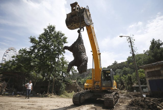 An excavator removes a dead bear at the zoo in Tbilisi, Georgia, June 17, 2015. Tigers, lions, bears and wolves were among more than 30 animals that escaped from a Georgian zoo and onto the streets of the capital Tbilisi during floods that killed at least 12 people. (Photo by David Mdzinarishvili/Reuters)