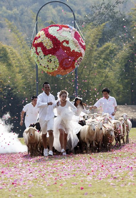 Couples run from sheep during their wedding ceremony at a resort in Ratchaburi province February 13, 2015. (Photo by Athit Perawongmetha/Reuters)