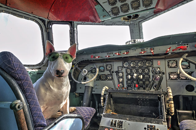 Claire piloting an abandoned airplane in Belgium. (Photo by Alice van Kempen/Caters News)
