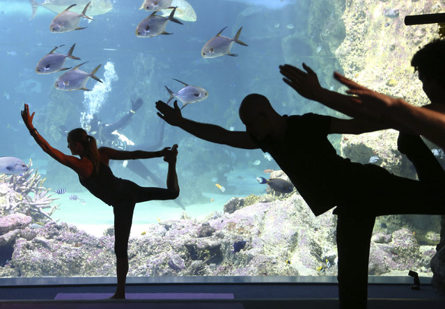 """Vivien Speers, front left, assists instructor Sasha Hawley, back, instruct a yoga class at the Sydney Sea Life Aquarium in Sydney, Thursday, October 17, 2013. Hawley, who founded """"Yoga by the Sea"""", instructs the class from inside a tank that includes Leopard  Sharks, Black Tip Reef Sharks, Grey Reef Shark and a Smalltooth Sawfish. (Photo by Rick Rycroft/AP Photo)"""