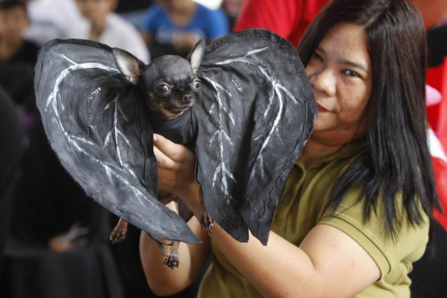 A pet owner displays her dog dressed in a Bat costume during the Scaredy Cats and Dogs Halloween costume competition in Manila. (Photo by Romeo Ranoco/Reuters)