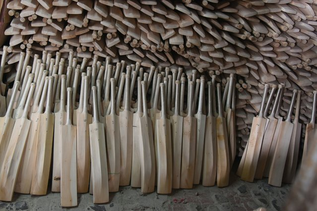 In this photograph taken on December 14, 2016, finished cricket bats stand awaiting labelling in a factory in Meerut, some 70kms north-east of New Delhi. (Photo by Dominique Faget/AFP Photo)