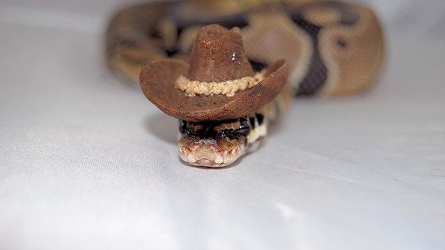 Snakes In Hats