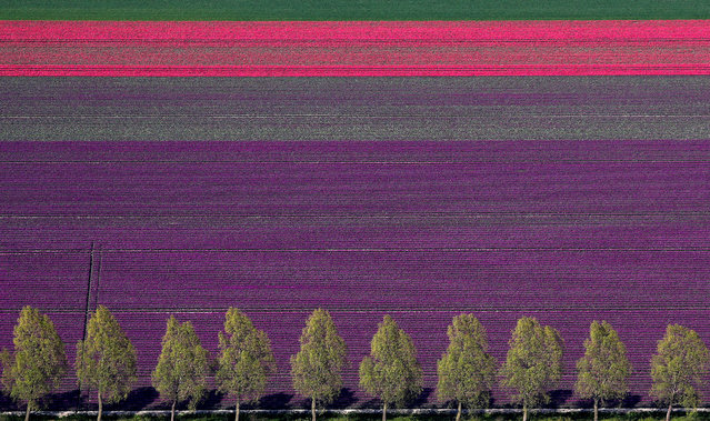 An aerial view of tulip fields near the city of Creil, Netherlands on April 18, 2019. (Photo by Yves Herman/Reuters)
