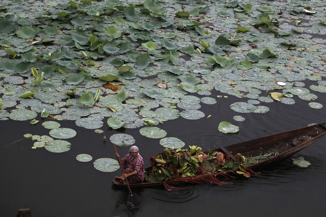 A Kashmiri woman rows a boat filled with lotus leaves on Dal Lake in Srinagar August 4, 2012. (Photo by Danish Ismail/Reuters)
