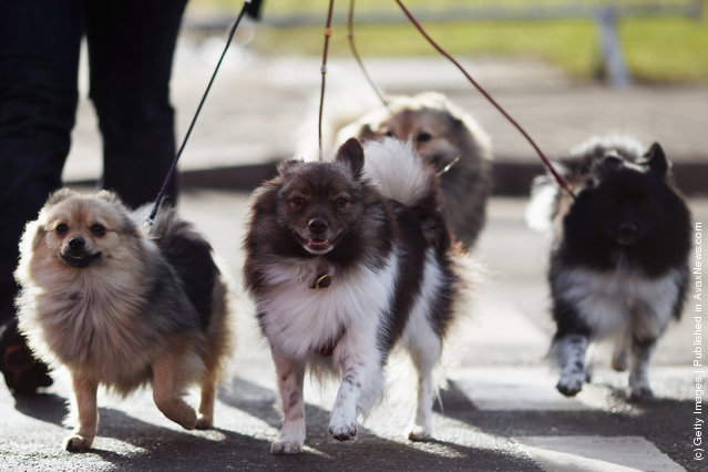 Dogs and their owners arrive on Day one of Crufts at the Birmingham NEC Arena