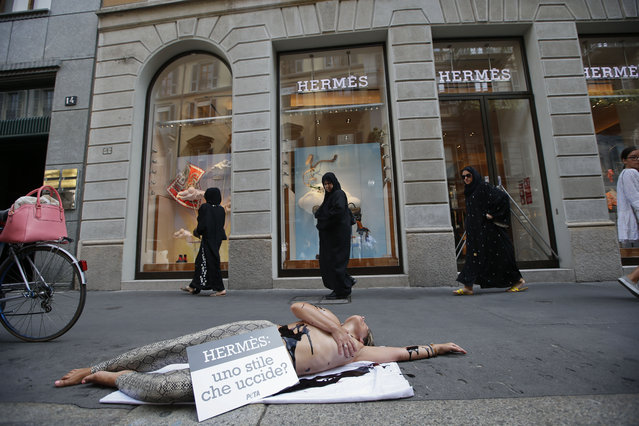 "An activist of People for the Ethical Treatment of Animals, PETA stages a protest against Hermes at Milan's fashion shopping district, in Milan, Italy, Thursday, July 30 , 2015. British singer Jane Birkin has asked Hermes to take her name off the crocodile-skin versions of the iconic Birkin handbag, after being contacted by animal rights group PETA over ""cruel"" slaughtering practices. (Photo by Luca Bruno/AP Photo)"
