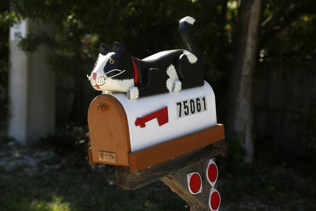 A mailbox decorated with a model cat is seen along the highway US-1 near Islamorada in Florida, July 11, 2014. (Photo by Wolfgang Rattay/Reuters)